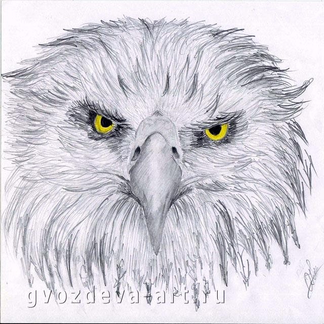 Рисунок орла
